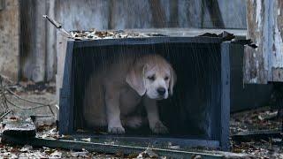 Смотреть клип Канги - Собака