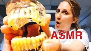 Asmr Tandarts/dentist Asmr Nederlands