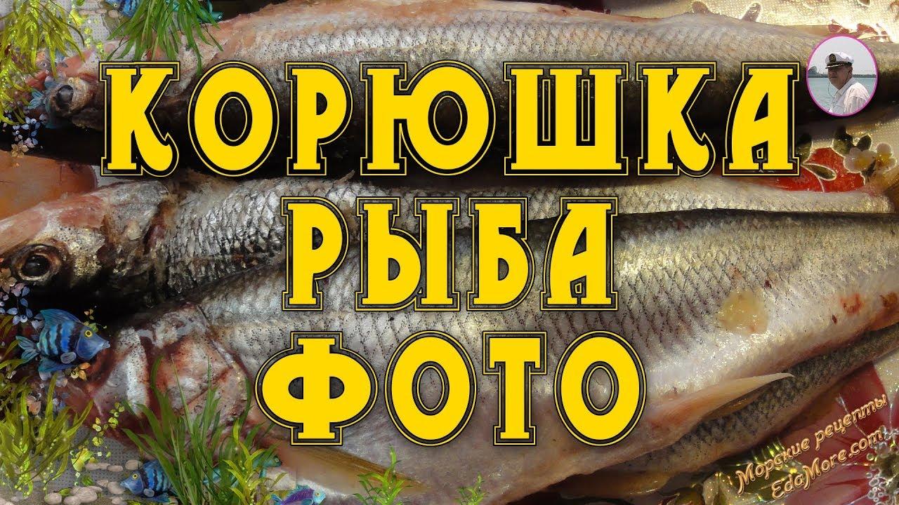 Корюшка рыба. Корюшка фото и видео от  Petr de Cril'on & SonyKpK