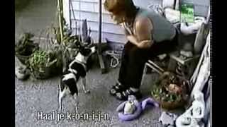 Funniest Home Videos 3 - Animal Party special part 1 (dutch subtitles-nederlands ondertiteld)