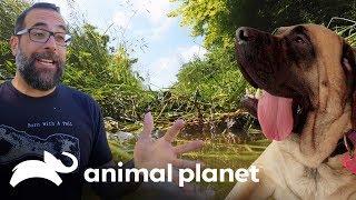 El jardín del perro gigante | Guaridas con estilo | Animal Planet