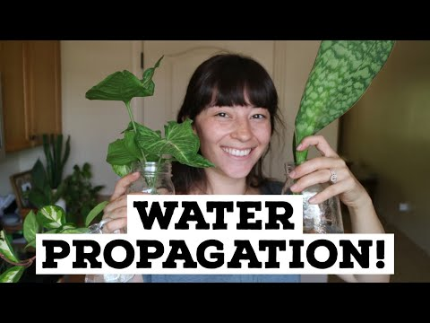 What I'm Currently Propagating | Water Propagating Plants