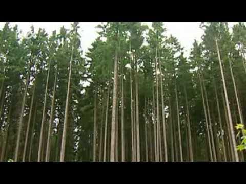 Planet Wissen - Tiere im Wald - YouTube