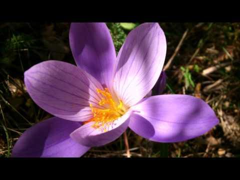 самые оригинальные цветы фото