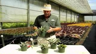 Succulent Agave Care Instructions.avi
