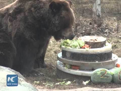 Bear Eating Birthday Cake