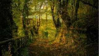 Waldszenen Op. 82 (Forest Scenes) by Robert Schumann, Hal Freedman, pianist