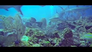 видео Дайвинг на Кубе