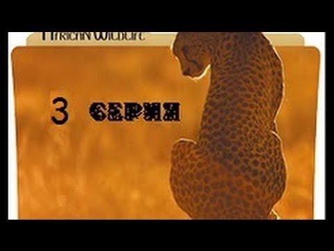 Удивительная природа Африки 3 серия - Видео онлайн
