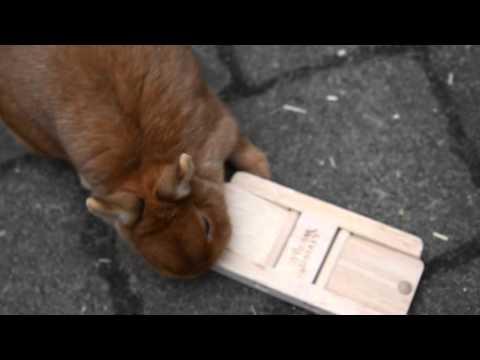 Konijnen Orry en Naranja spelen met intelligentiespeelgoed
