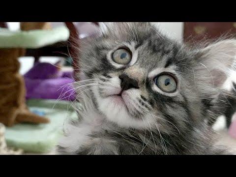 Kitten Close Up 2017-11-18