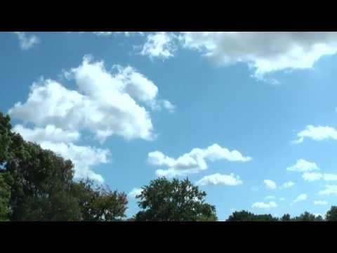 Hur- Saker Falcon- Geroen De Smet -breeding-Belgium