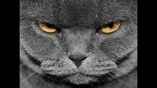Video Terheboh Kucing Marah Marah vs anjing
