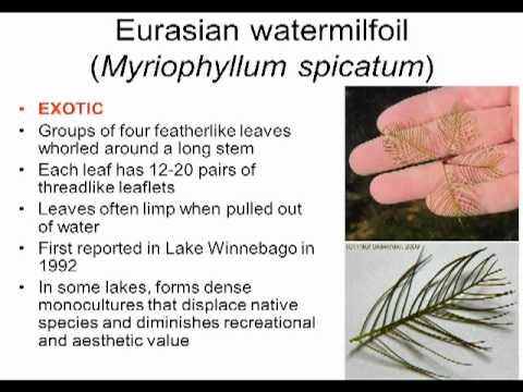 Dip Into Lakes: Aquatic Plants Biology