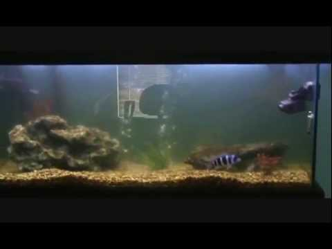 How to clear cloudy aquarium water youtube for My fish tank water is cloudy