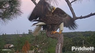 SWFL Eagles. ~ Another Day In Silence With Harriet & M15. Say Something, M! thumbnail