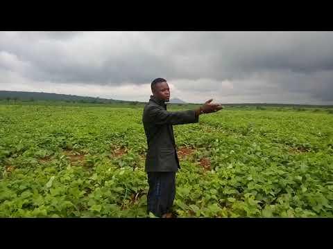 KILIMO BIASHARA NA G_WASAYMON MSANII TOKA TANZANIA ANAKWAMBIA MJINI HAKUNA HELLA KAMA SHAMBABANI