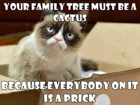 Funny Cat Running Funny Cat One Liners