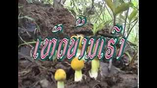 hed ban hao (Mushrooms of our home, Attapue Province in Laos)