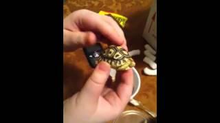 Getting my baby leopard tortoise(: