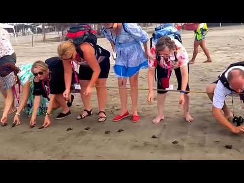 26-02-2018 - Acapulco City Tour - Baby - Turtle Release - by Rudy Fregoso
