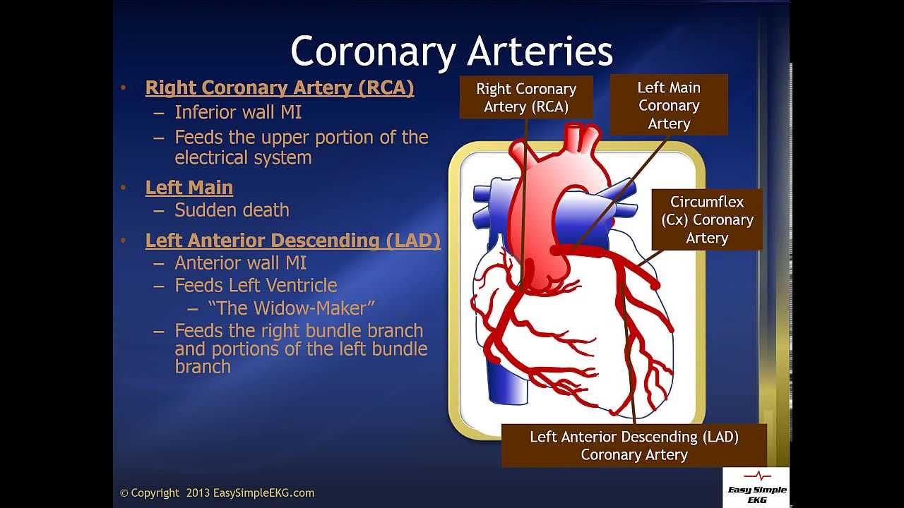 Coronary Arteries - YouTube
