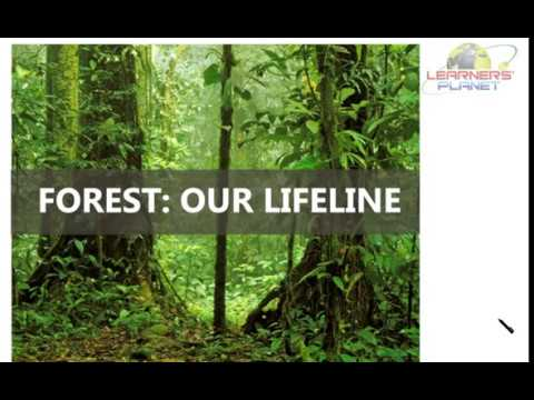 Forests- Our Lifeline Essay