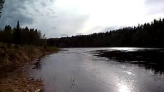 Havsöring fångad i Ljungan / sea trout caught in Ljungan 3,5 kg