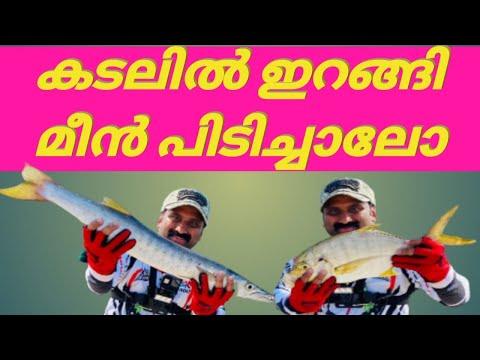 Barracuda > STRIKE/fishing/shore Fishing Uae/abudhabi Fishing /