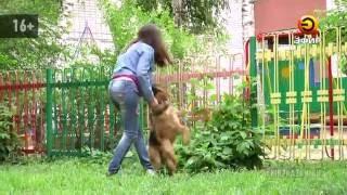 Соседи требуют избавиться от собаки, подаренной президентом России