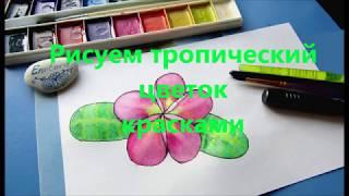 Как нарисовать цветок акварелью.  Поэтапное рисование плюмерии
