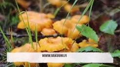Sienien säilöminen vakuumiin