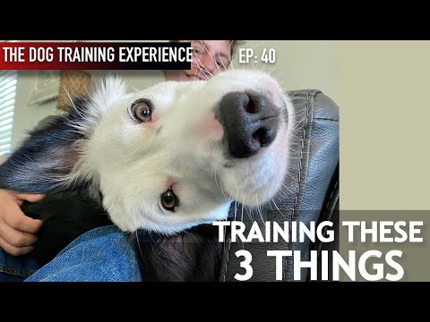 Is My Own Dog Untrainable?!