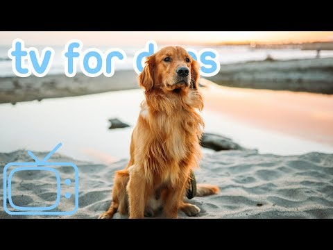 TV for Dogs! NY Coney Beach Virtual Dog Walk with Relaxing ASMR Music!