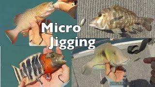 Micro Jigging Technique Slow Jigging Reef Fish Australia Andy