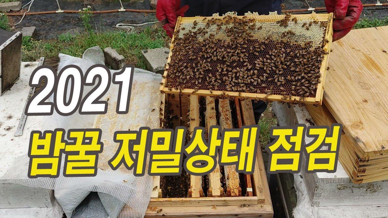 2021 밤꿀 저밀상태 점검.