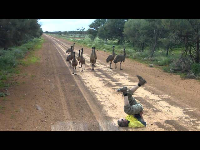 Emu run!!!!.MTS