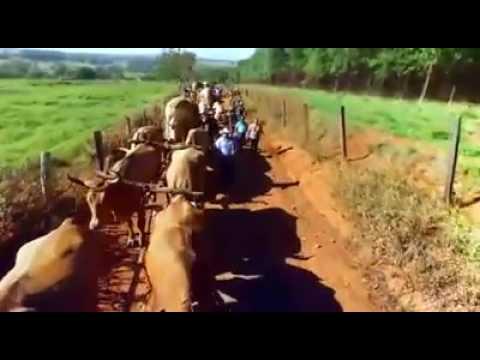 Amado Batista - Romaria de Trindade!