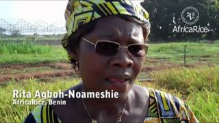 Women rice farmers of Africa