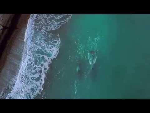 Peninsula Valdez - A nature paradise