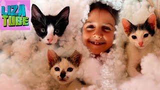 Котята и Лиза в холлофайбере, котята выбирают победителей на ПРИВЕТЫ