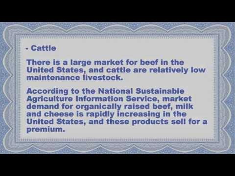 Most Profitable Livestock To Raise