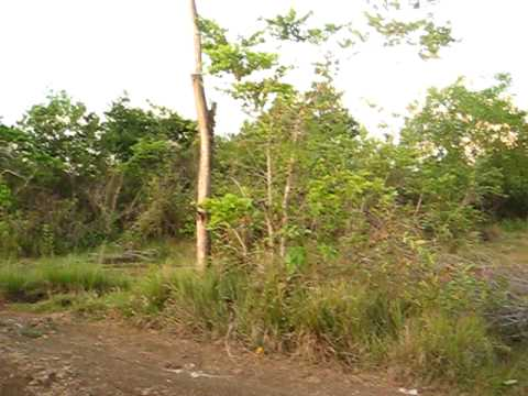 Panglao Dauis Bohol land for sale approx. 4000 sq meters @ 650 per sq meter. 3 min from the beach.