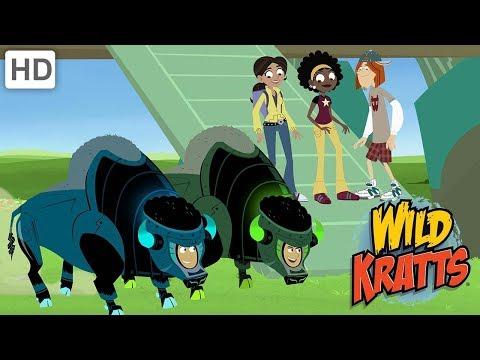 Wild Kratts - Muskox Vs. Wolves And Cheetahs!