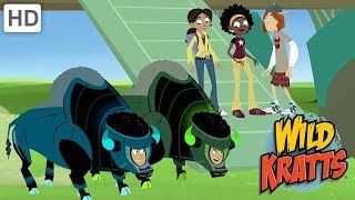 Wild Kratts - Muskox vs. Wolves and Cheetahs!