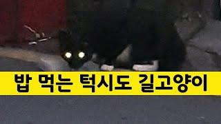[stray cat, kitten] 밥 먹는 턱시도 길고양이, Cat Purring, food, 새끼 고양이, 냥이, 아깽이, 새끼 냥이, 길냥이, cat, kitten, 반려동물