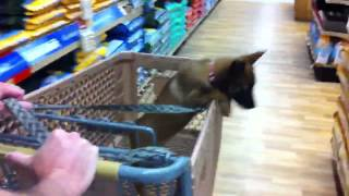 Puppy Training - Diary Episode #3 - How To Socialize Your New Puppy To The Outside World
