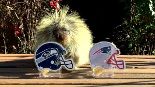 CUTE ANIMALS Predict the SUPER BOWL Winner | What's Trending Now