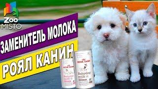 Сухой заменитель молока Royal Canin | Обзор молока для щенков и котят | Royal Canin Milk review