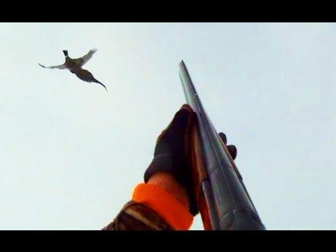Pheasant Hunting S. Dakota